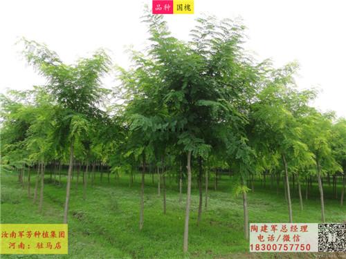 苗圃基地苗木种类展示1